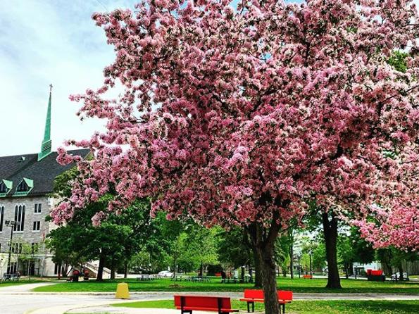 50_arbres_Vanier